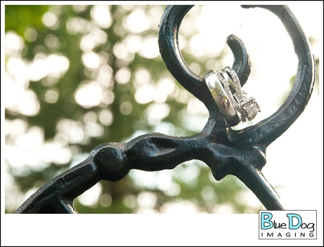blue-dog-imaging-priestley-savidge-house_0026
